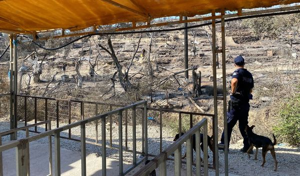 Des policiers patrouillent avec des chiens aux abords du camp ravagé