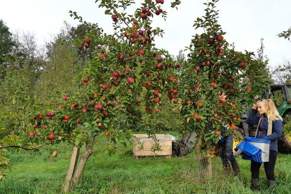 La ferme d'Hilbert, une ferme orientée vers la production de pommes-poires, certifiée 'Agriculture biologique', qui adhère au réseau du Wwoofing