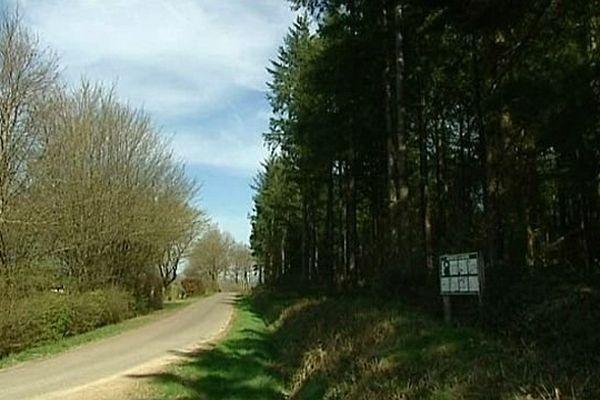La forêt du Rousset en Saône-et-Loire