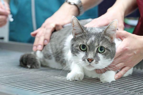 A Montélimar dans la Drôme, un chat blessé à été jeté dans une benne à ordures par un agent d'entretien, mardi 5 mai. La séquence a été filmée, la Fondation 30 millions d'Amis porte plainte pour acte de cruauté.