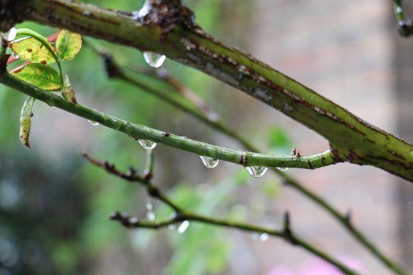 La journée s'annonce humide dans la région.