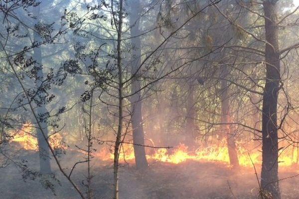 Cinq hectares de pinède sont partis en fumée.