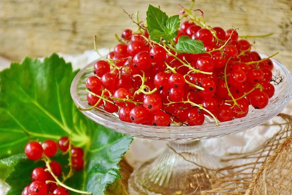 La groseille est un petit fruit délicat riche en jus et en bons nutriments.