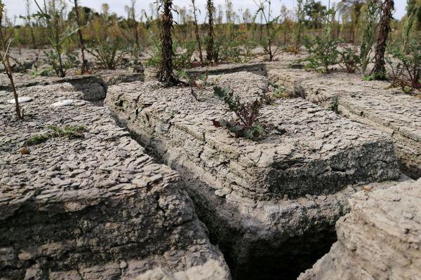 Les sédiments extraits de la Rance durant l'hiver 2018-2019 ont séché dans les lagunes du centre de transit de Saint-Samson-sur-Rance.