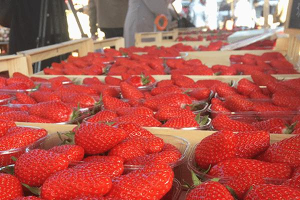 Les Gariguettes de Dordogne sur le marché à Perigueux