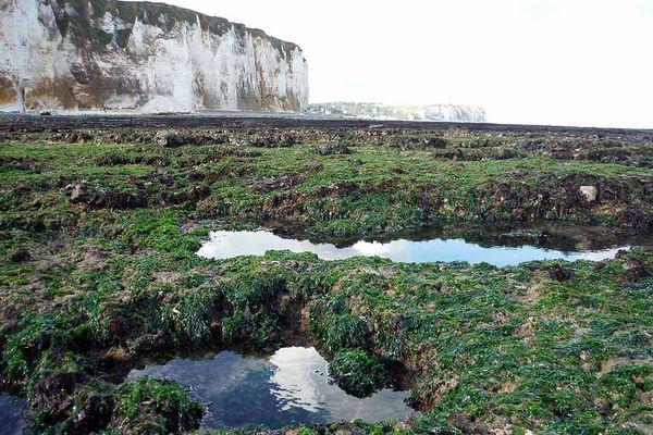 Rochers (à marée basse) à l'ouest de la plage de Veulettes-sur-Mer (Seine-Maritime)