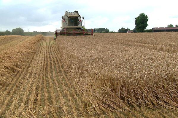 Rendement exceptionnel, cet été 2020, pour les exploitants de blé de Bailleul.