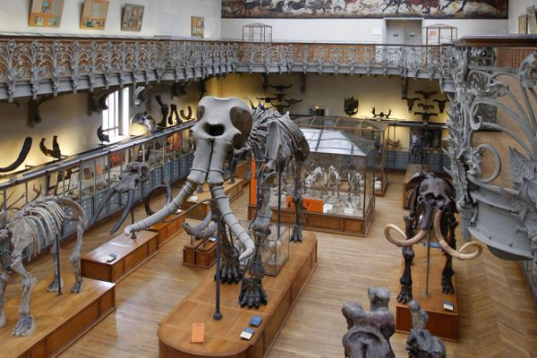 Le mammouth star du Muséum d'histoire naturelle de Paris a été découvert à Durfort (Gard) en 1869.