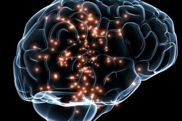 Semaine du cerveau en Centre-Val de Loire