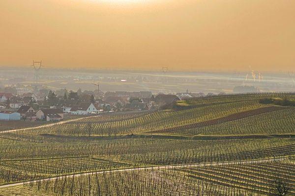Un record de chaleur a été enregistré dans le Haut-Rhin, mercredi 24 février.