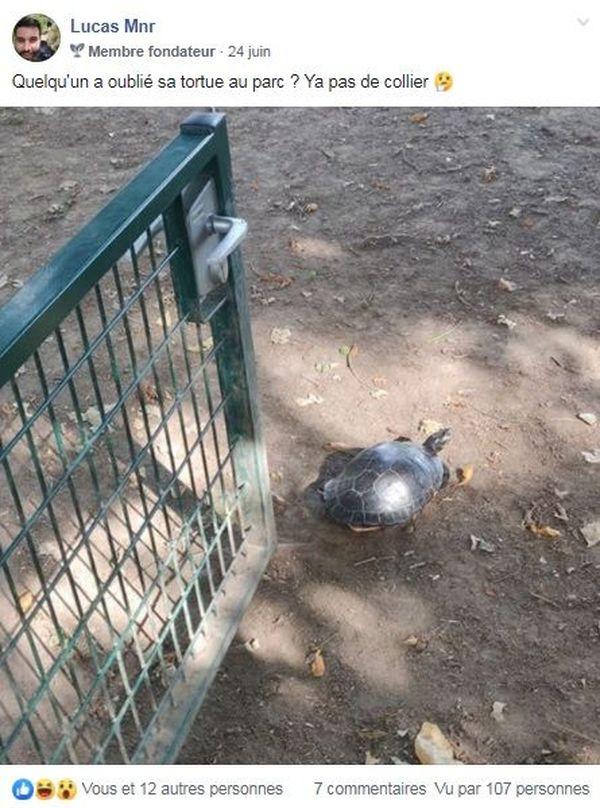 On croise plus souvent des chiens que des tortues, à la Citadelle.