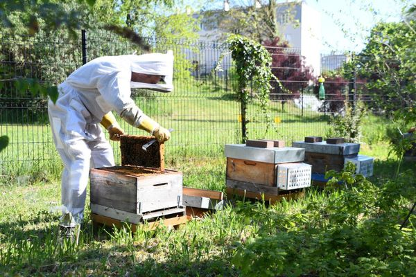 les ruches du commissariat de Limoges