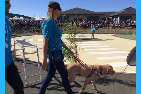 La formation des chiens guides d'aveugle dure 2 ans. Ils apprennent à se déplacer en toute sécurité avec leur maître. Et ils doivent aussi faire preuve d'initiative.