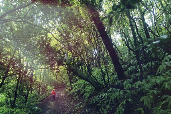 Promenade en forêt : pensez à éveiller vos 5 sens.