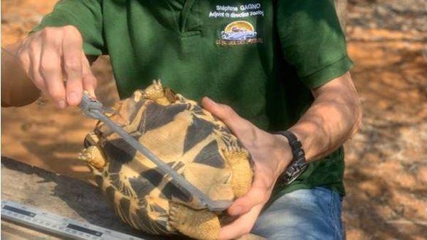 Identification d'une tortue à l'aide du lecteur de puces.