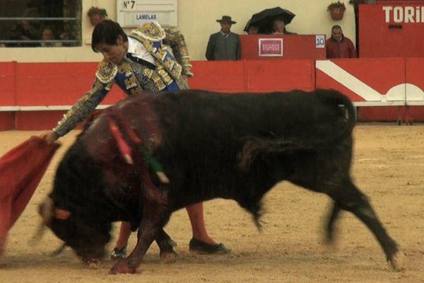 Alberto Lamelas, originaire de Jaén. Il est abonné aux corridas dures en France. C'est mieux qu'en Espagne où il n'est pour ainsi dire jamais engagé!