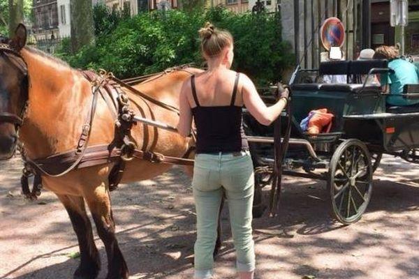 Proposition de traction animale pour le transport scolaire