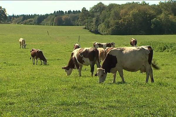 Produire du lait à comté bio, ce sera désormais le travail des nouveaux propriétaires de la ferme du Bois Joly, au Fied, dans le Jura.