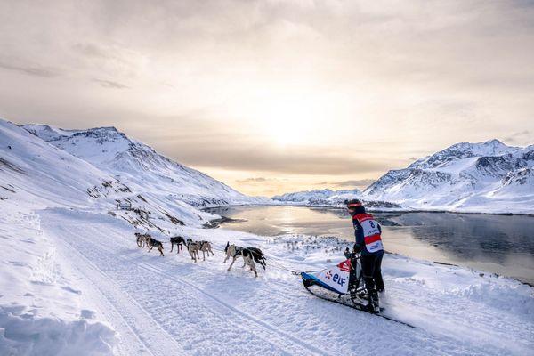 Un musher lors de l'édition 2020 de la Grande Odyssée Savoie Mont-Blanc.