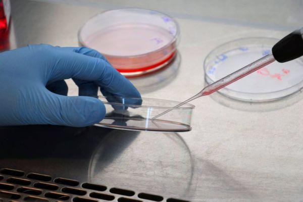 """Covid-19 : l'Institut Pasteur de Lille travaille sur une molécule """"particulièrement efficace"""""""