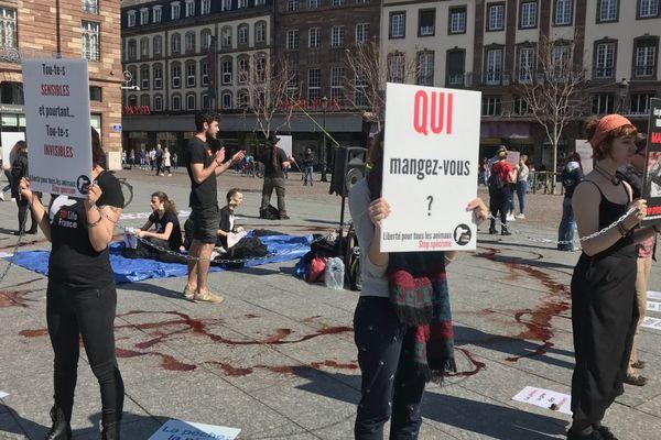 Une vingtaine de militants se sont mobilisés samedi 30 mars à Strasbourg pour dénoncer l'exploitation des animaux marins par l'homme.