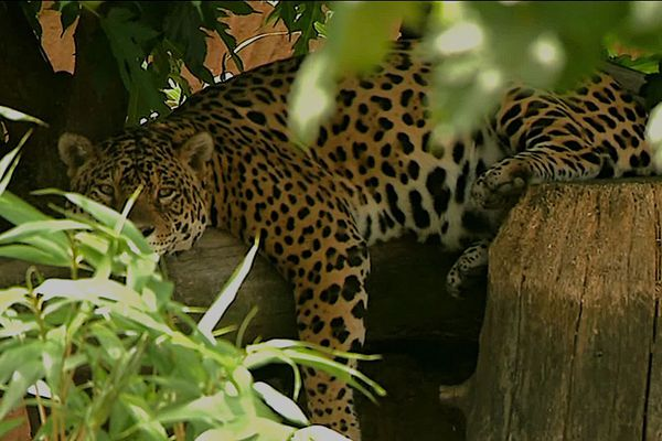 Petits et grands mammifères, oiseaux et prédateurs de toute sorte se côtoient sur 3 hectares et demi, dans le Domaine des fauves.
