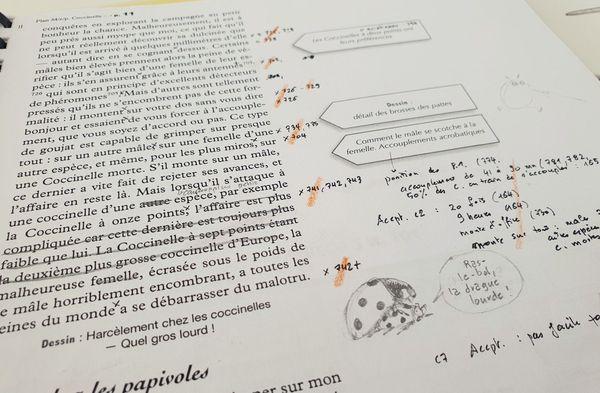 Les brouillons de travail de la Hulotte, émargés des informations de mise en page, des références des études scientifiques, et des idées de dessins de PIerre Déom.