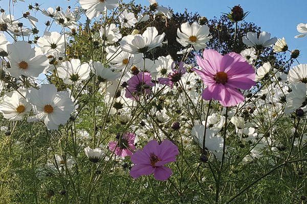 Une partie des fleurs qui ont éclos l'année dernière dans le jardin de Jane Gille Nave.