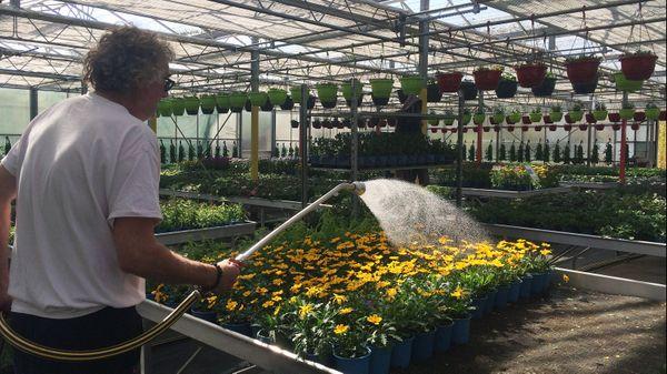 Les plants et les fleurs arrivant à maturité, il fallait trouver un moyen de les commercialiser, 80% du chiffre d'affaire se fait entre la mi-Mars et fin Mai.