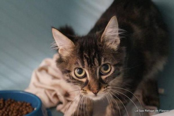 Le chaton Vesper est à adopter au refuge SPA de Flayosc dans le Var !