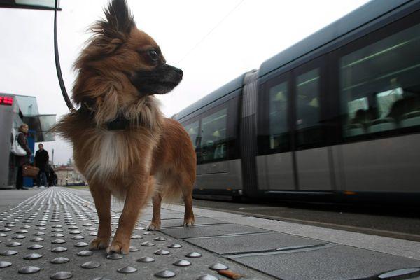 Voyager avec son animal de compagnie dans les transports en commun n'est pas toujours simple.