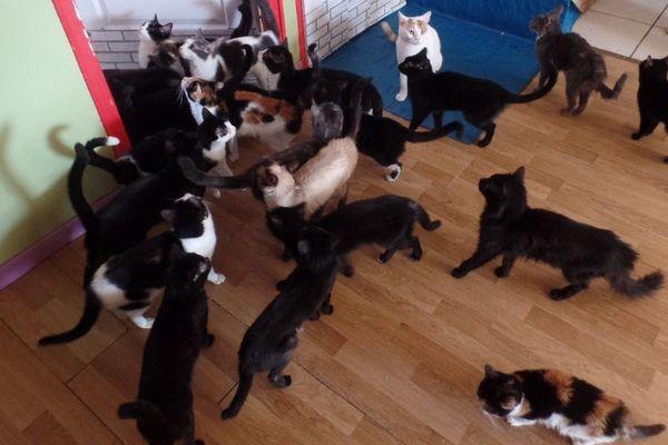 Pas moins de 32 chats retrouvés dans un appartement du côté de Mirecourt (Vosges).