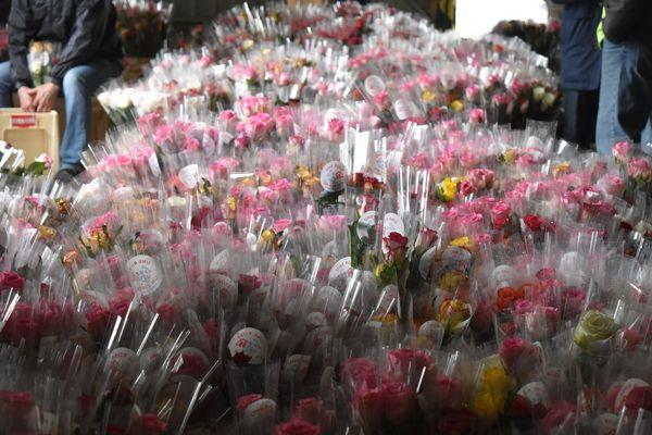 Une vague de rose s'étend jusqu'au bout du hangar long de plusieurs mètres. Au total, plus de 17.000 fleurs ont été emballées par les bénévoles.