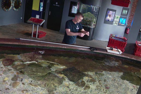 Arnaud Decaix, responsable aquariologie devant le bassin tactile de Maréis