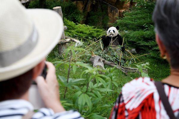 Lors de sa réouverture le 2 juin, les visiteurs sont venus en masse découvrir le zoo de Beauval - Photo d'illustration
