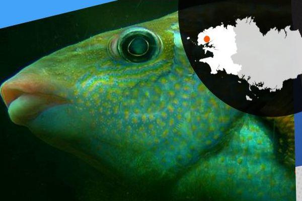 4 millions de litres d'eau de mer sont utilisés à Océanopolis. Le site contient 68 bassins accueillant différentes espèces