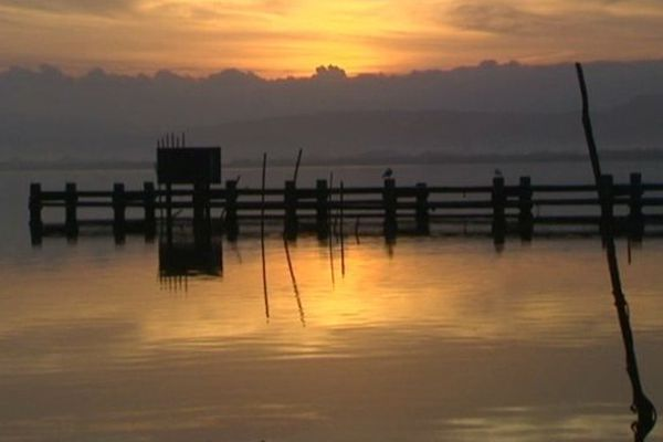 Le jour se lève sur l'étang de Bages dans l'Aude, c'est l'heure de la pêche à l'anguille