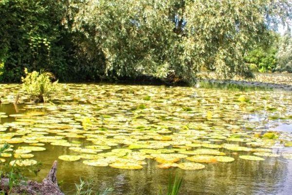 Le Marais de Saint-Omer devient la douxième réserve de biosphère française, un label décerné par l'UNESCO