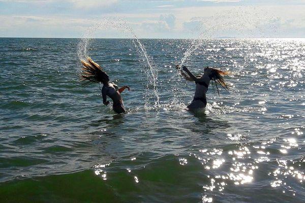 Nager en mer méditerranée et jouer dans l'eau, serait-ce à nouveau possible à partir du week-end du 16 mai 2020 ? La balle est dans le camp des préfets.