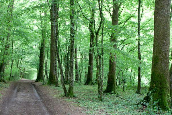 La forêt de Chaux est la deuxième plus grande forêt de France, après celle d'Orléans.