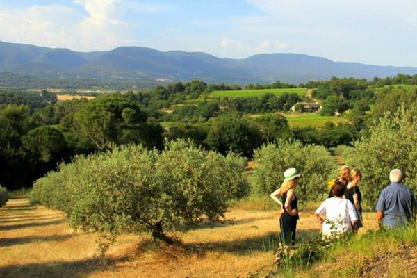 Les visiteurs peuvent découvrir l'oliveraie.