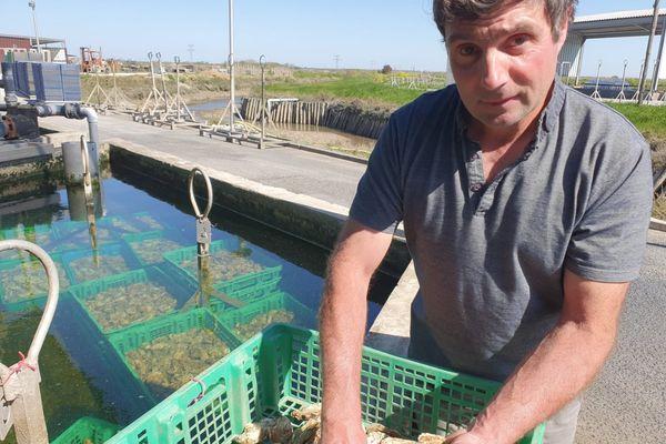 C'est chez Yannnick Dubuy, ostréiculteur de Marennes, que l'huître miraculeuse a été achetée