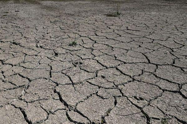 La sécheresse de 2018 est considérée comme la plus importante depuis celle de 1976.