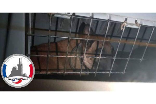 """Prisonnier d'un coffre de voiture depuis janvier, ce chien  """"C'est juste un outil de travail"""" a déclaré son propriétaire et agent de sécurité."""