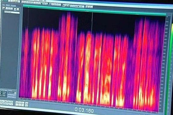 Laudun-L'Ardoise (Gard) - analyse de la voix  dans le cadre d'enquêtes judiciaires au laboratoire de Lipsadon