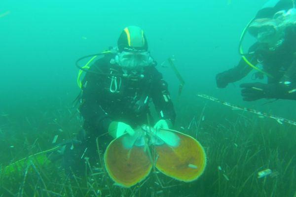 A Villefranche-sur-Mer, un plongeur retrouve un coquillage qui est mort suite à une bactérie.