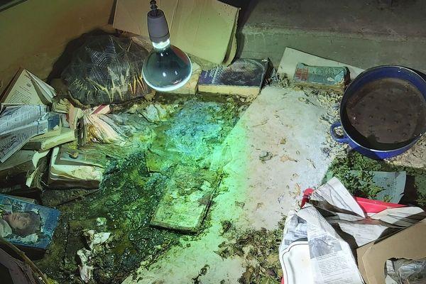 La tortue radiée a été découverte au milieu des déchets.