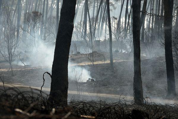 Après le feu de forêt à Anglet le 31 juillet.