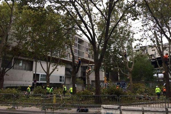 22 platanes doivent être abattus Quai d'Ivry à Paris
