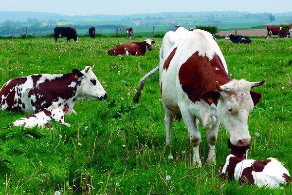 À l'occasion de la Semaine de l'Agriculture française du 13 au 24 mai